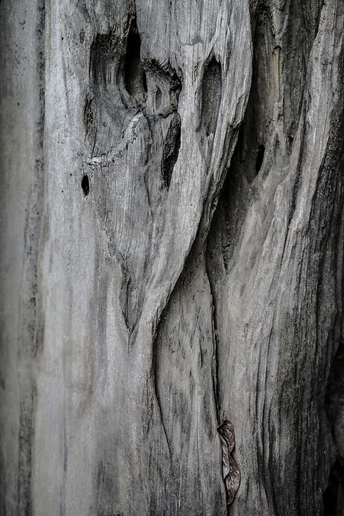 Kalpataru-31.jpg