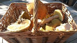 Arctic mushroom foraging