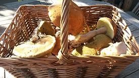 Foraggiamento di funghi artici