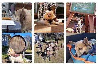 Hildrun's dogs.jpg