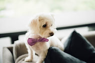 Wedding dog 1.jpg