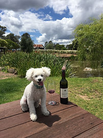 dog and wine.jpg