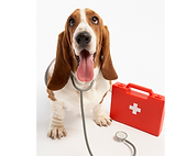 First Aid Dog.png