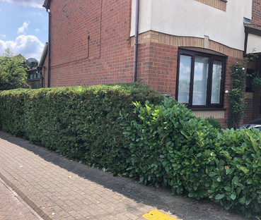 Hedge 10