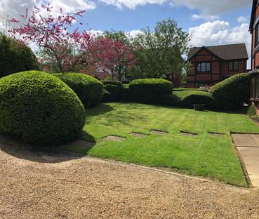 Hedge 1