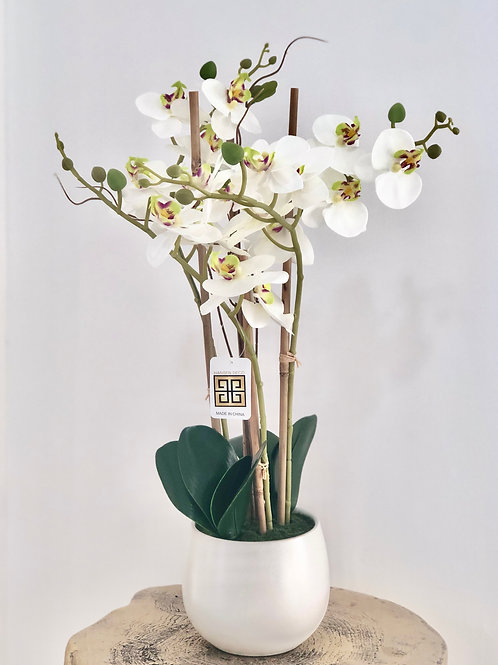 Orchid white sphere - white