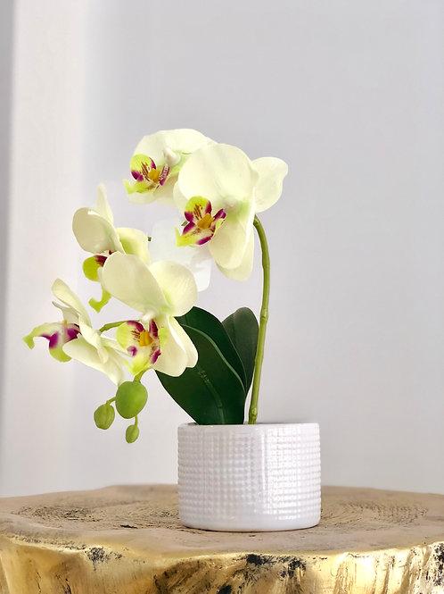 Orchid white dots vase - Breeze white