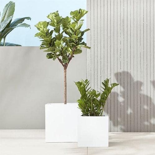 Caja para Jardín Brillante