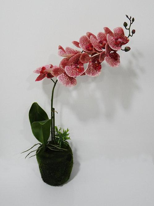 Orquídea Pequeña - Pink
