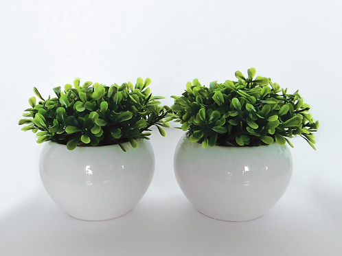 Decorative Plants - White Vase