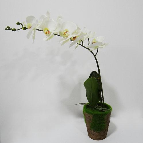 Orquídea Mediana - White