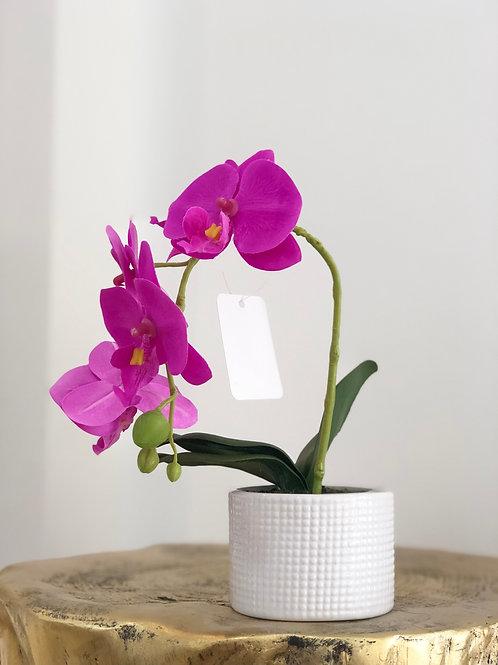 Orchid white dots vase - Dark pink