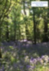 Bluebells LH 19.jpg