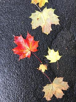 Autumn Leaves St P.jpg