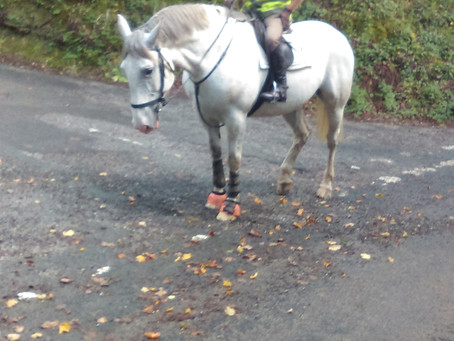Guided walk led by a horse!
