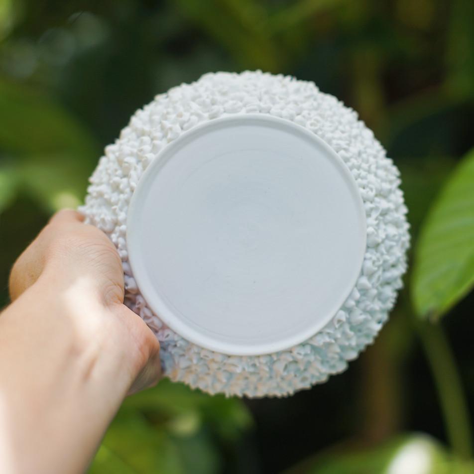 Barnacle Platter
