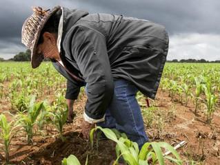 """Mira como la ingeniería aplicada está mejorando la agricultura en Guanajuato. """"MasAgro"""""""