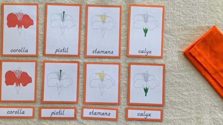 Flor - Cartões de três partes (Flower - Three Part Cards)
