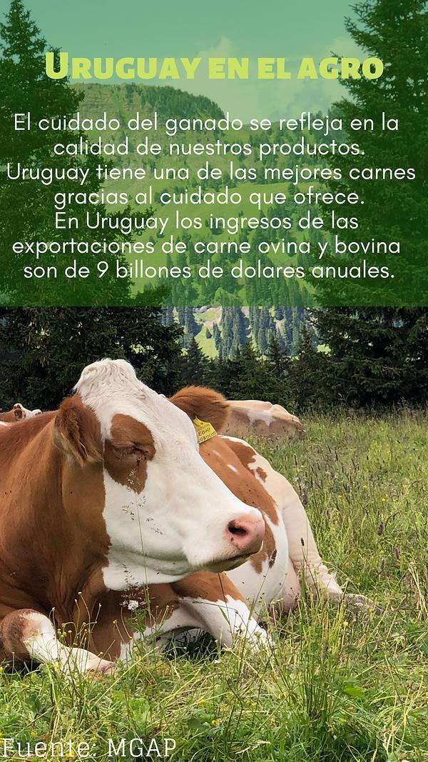 Carne uruguaya.png