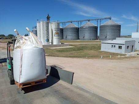 Exportaciones de semillas forrajeras aumentan20% medidas en toneladas y 7% en valor FOB