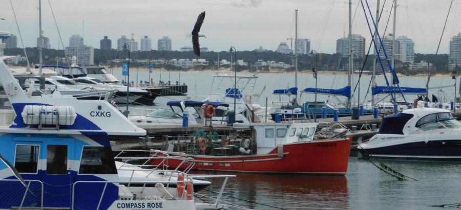 Iniciativa que vincula a la pesca artesanal con la gastronomía en Punta del Este motivó visita