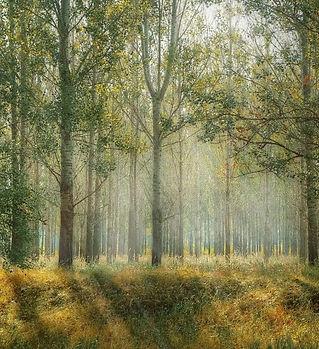 árboles-1024x576.jpg