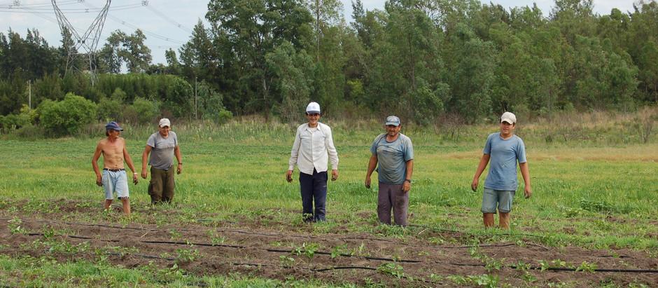 En Uruguay, para 32 ciudades de más de 5.000 habitantes la producción agroindustrial es una fuente d