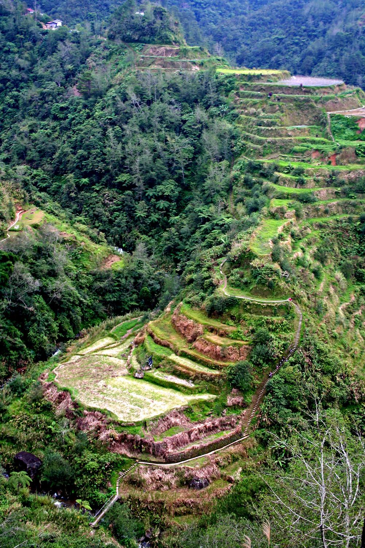 Risaie terrazzate (Banaue – Filippine, gennaio 2020)