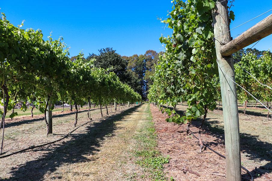 Junction Wines-32.jpg