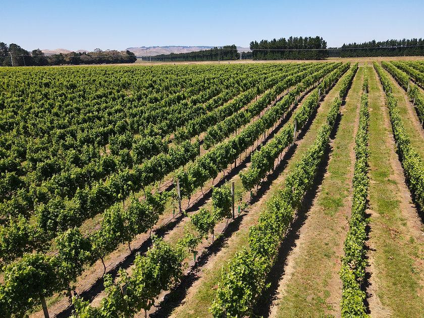 Junction Wines-05.jpg