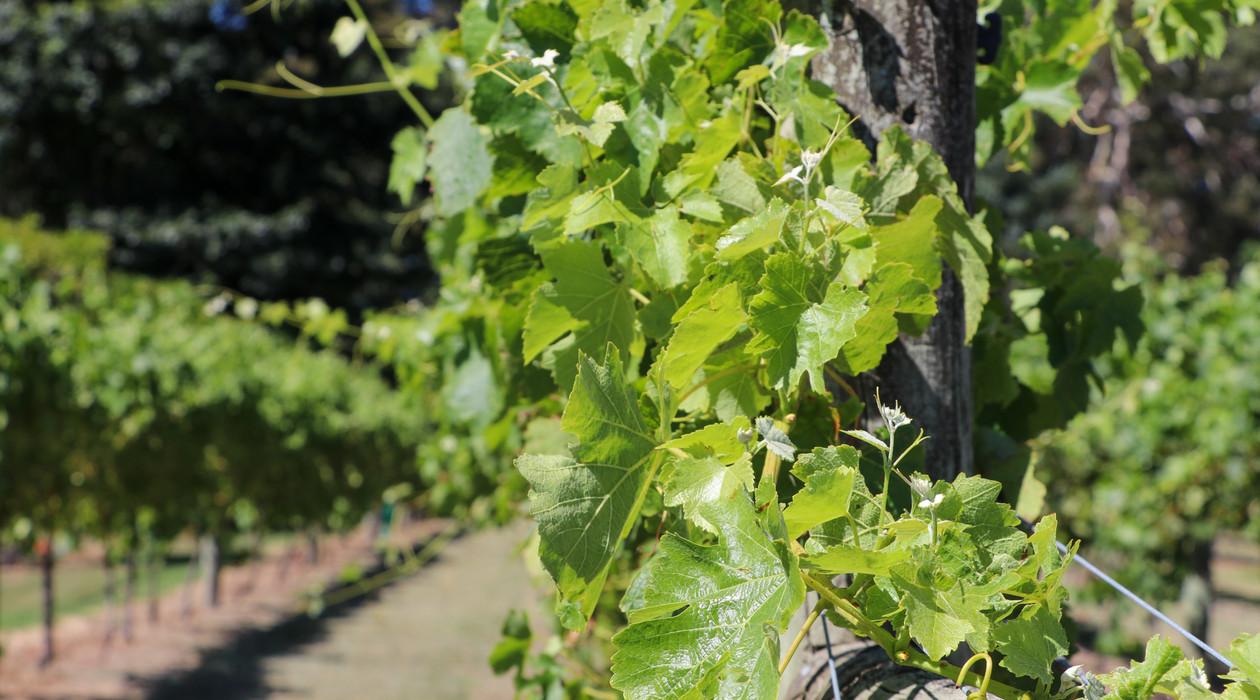 Junction Wines-36.jpg
