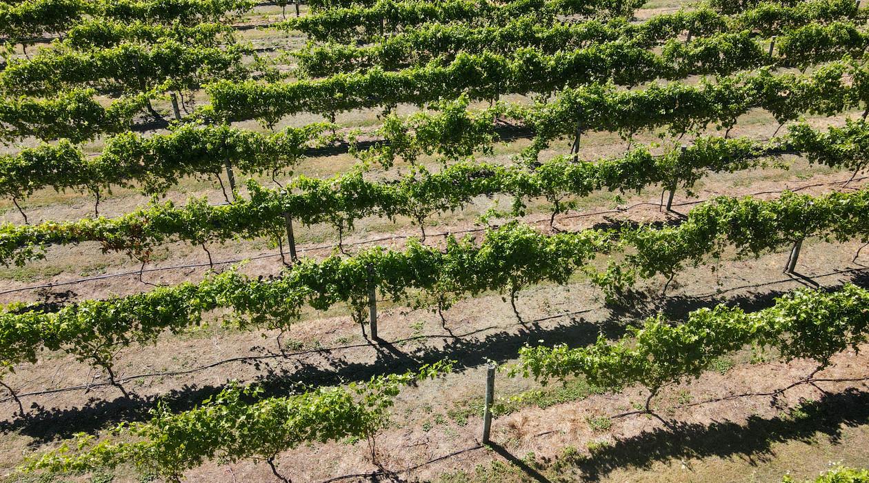 Junction Wines-40.jpg