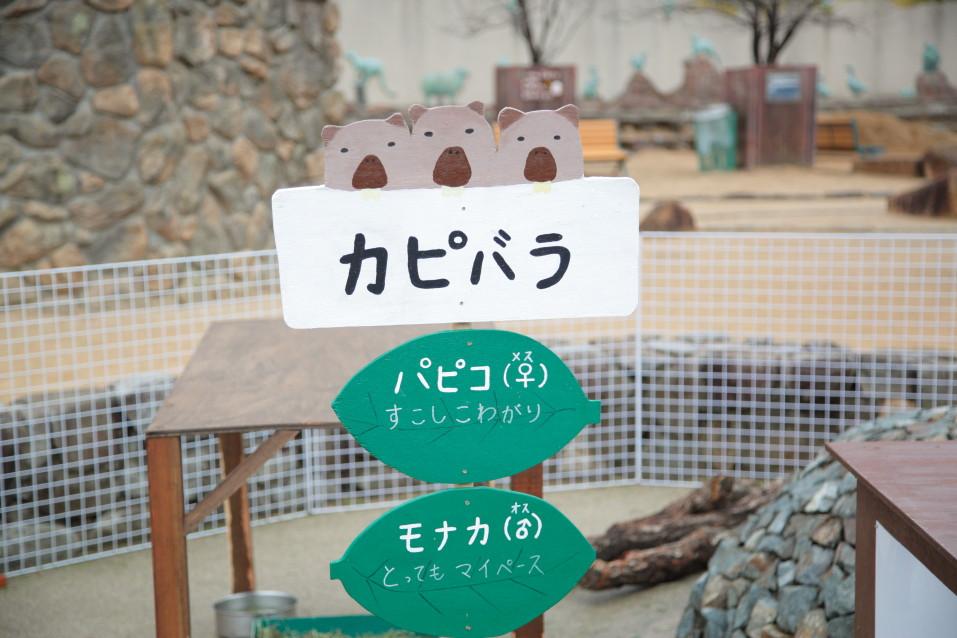 カピバラ 動物園撮影