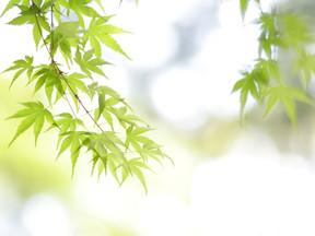 これから新緑の季節