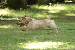 飛び犬 犬の写真 犬の出張撮影 走る犬撮影