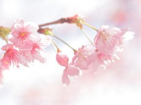出発の春!