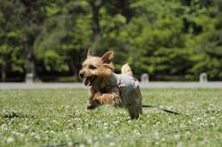 犬撮影 ペット撮影 わんこ 出張撮影 自然な写真