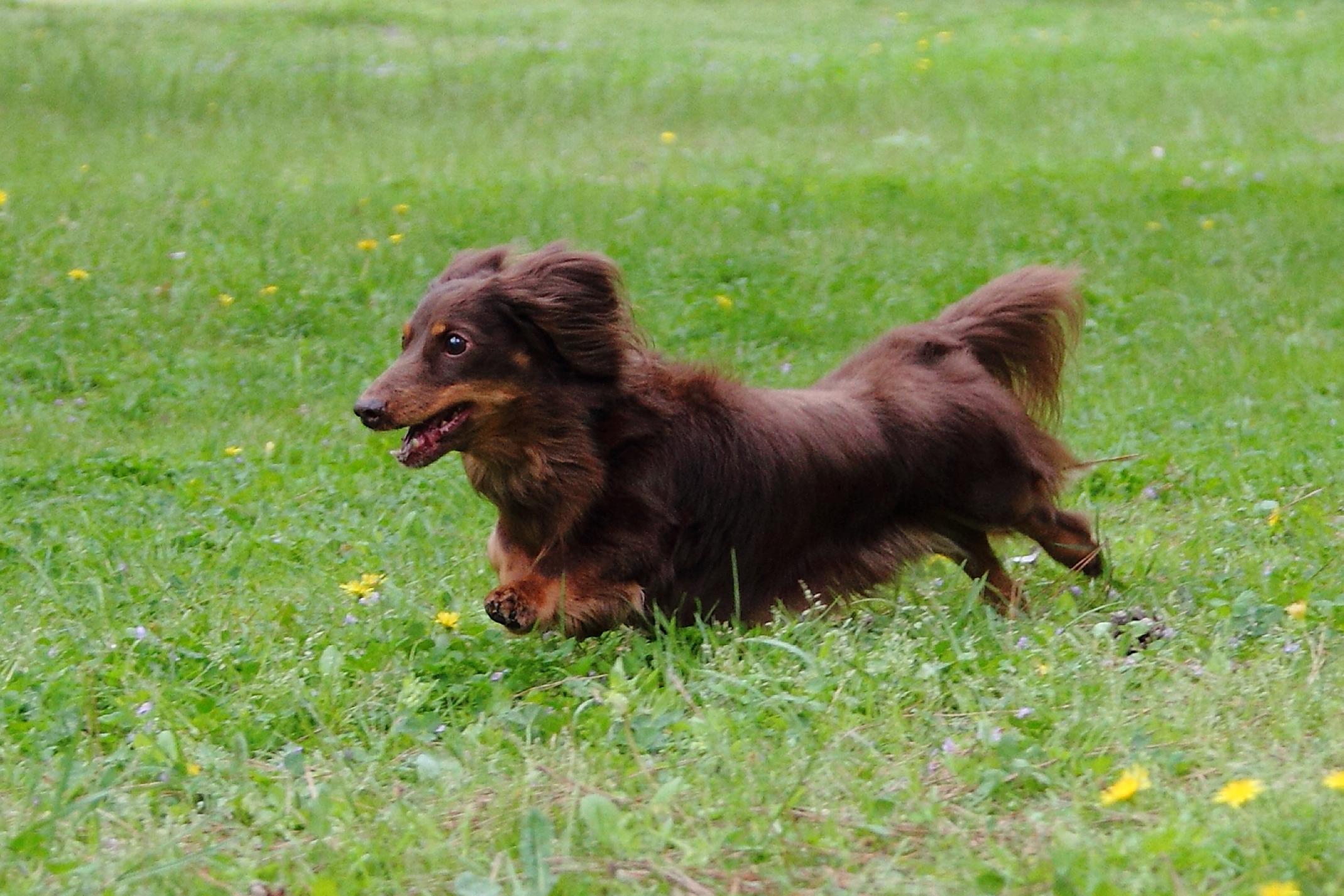 自然撮影 ペットと撮影 ロケ 飛び犬 出張撮影