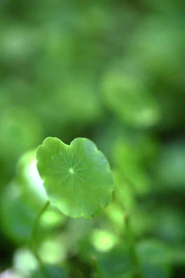 グリーン 植物