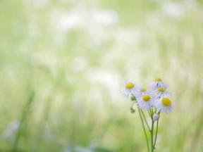 花だけど雑草 雑草だけど花