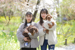 家族写真 ペットと家族写真 ミニチュアダックス トイプードル