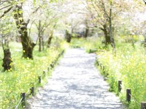 きれいな春の道