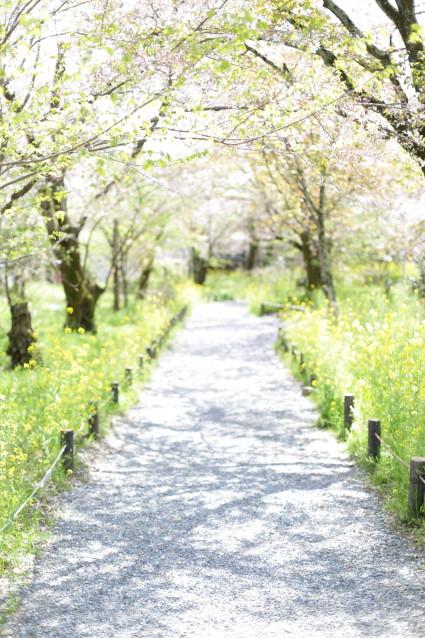 春の道 未来へ続く道