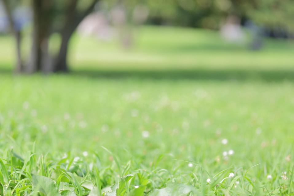 公園撮影 出張撮影 ロケーション撮影 カメラマン滋賀