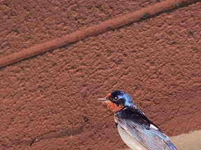 鳥言葉は「幸せの予感」