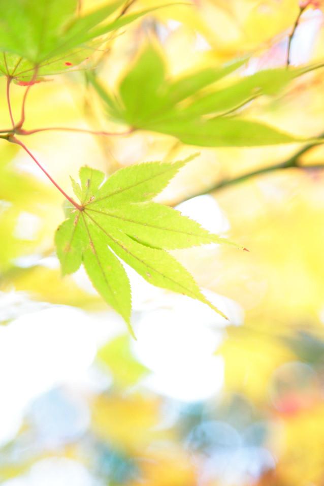 風景写真京都 青もみじ カメラマン京都