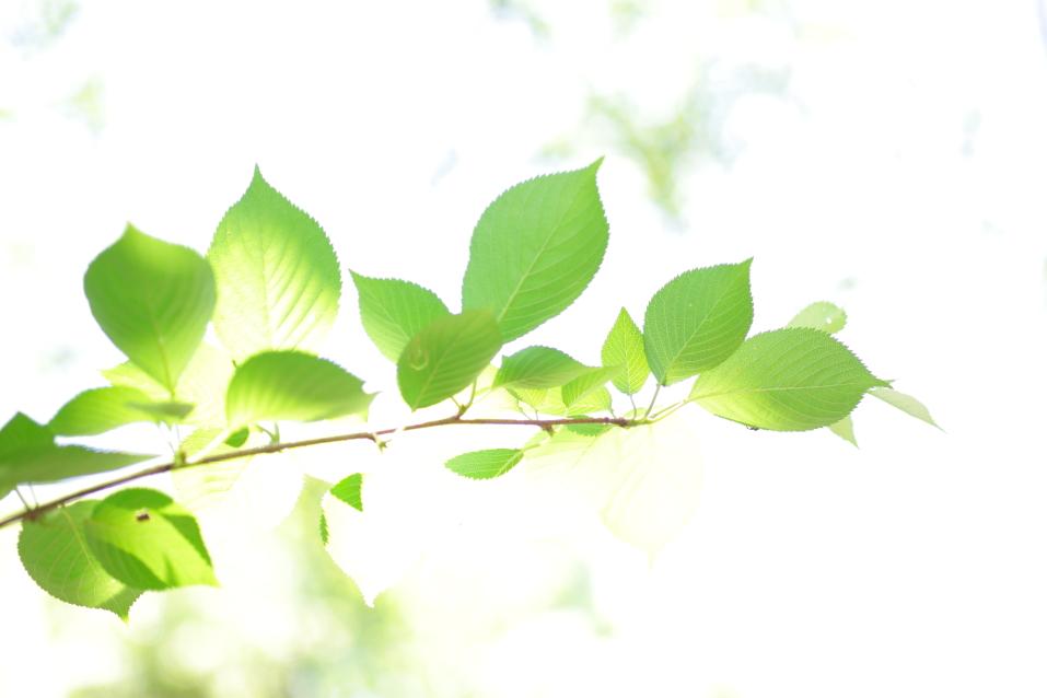 5月 新緑 カメラマン大津