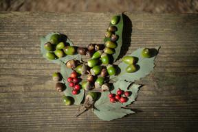 希望が丘公園で木の実を拾う