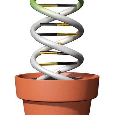 DNA Growth