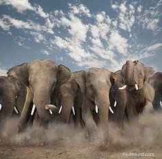 Elephants-Stampeding-Photo-Danger.jpg